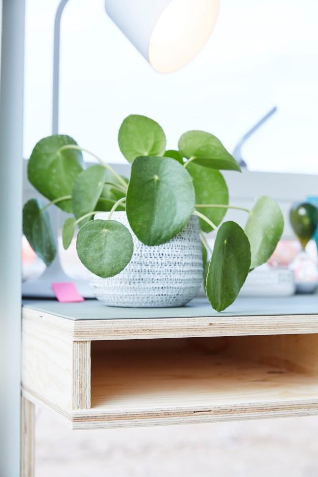 Ekstra værelse - Gul lejlighed plante